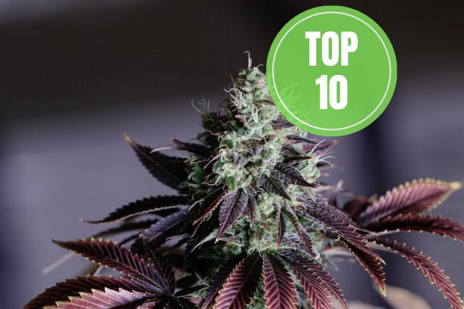 top 10 best indica strains
