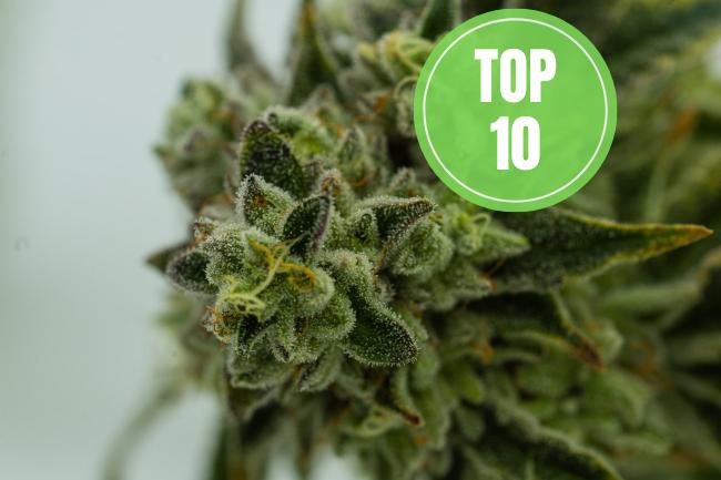 top 10 highest cbd strains